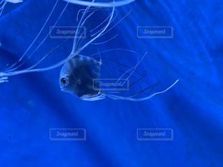 魚,青,水族館