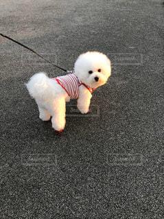 犬,動物,屋外,白,地面,子犬