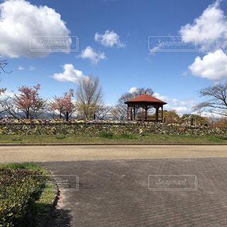空,公園,花,屋外,白,青,草,樹木,庭園,グラデーション,草木,日中,クラウド,写真映え