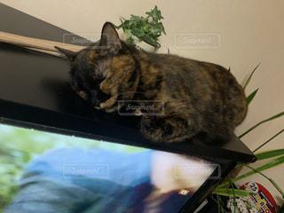 猫,動物,景色