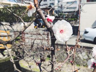 花,春,桜,屋外,ブロッサム,春をみつけた