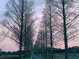 自然,風景,空,屋外,樹木,並木,滋賀県,メタセコイア