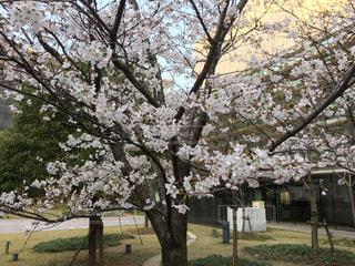 春,桜,図書館,卒業,入学