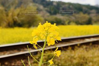 自然,春,絶景,屋外,黄色,線路,菜の花,鉄道,景観