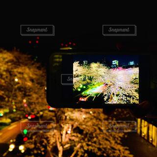 自然,春,桜,夜景,絶景,屋外,道路,夜桜,スマホ,都会,ライトアップ,イベント,景観,草木
