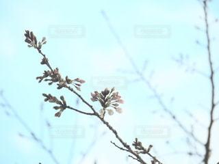 空,花,春,屋外,枝,樹木,ブロッサム