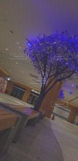 DARK TREEの写真・画像素材[3032231]