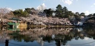 逆さ桜の写真・画像素材[3034354]