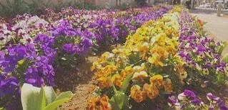 小さなお花畑の写真・画像素材[3039049]