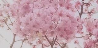 空に映えるピンクの写真・画像素材[3039755]