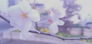 春の訪れの写真・画像素材[3039775]