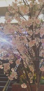 花のクローズアップの写真・画像素材[3039935]
