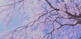 背景に山のある木の写真・画像素材[3050292]