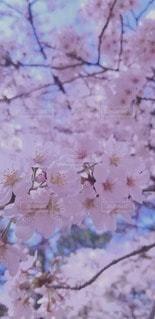 花のクローズアップの写真・画像素材[3050297]