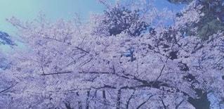 雪に覆われた山のクローズアップの写真・画像素材[3050339]
