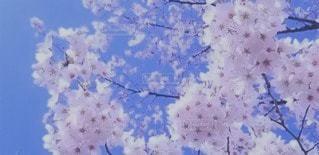 花のクローズアップの写真・画像素材[3050374]