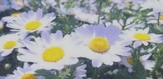 花のクローズアップの写真・画像素材[3073582]