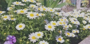テーブルの上に花の花瓶の写真・画像素材[3073587]