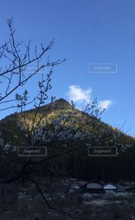 山里の梅の写真・画像素材[3026194]