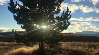 自然,風景,屋外,海外,太陽,日光,樹木,眩しい,旅行,写真,海外旅行,ニュージーランド,大樹,Newzealand,西陽,神々しい,ゴルフコース