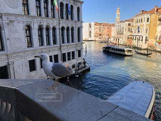 鳥,世界遺産,イタリア,海外旅行,ヴェネツィア
