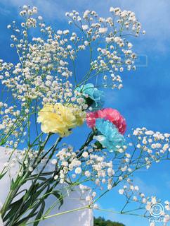 空,花,春,花束,青い空,カーネーション,ブルーム