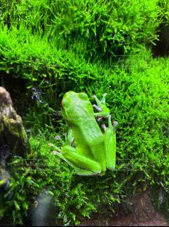 自然,風景,緑,樹木,ペット,苔,カエル,両生類,草木,アカガエル科