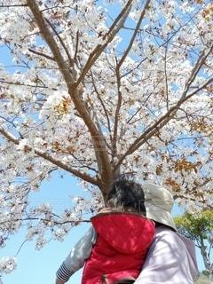 2人,花,春,桜,木,屋外,花見,お花見,イベント,草木