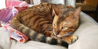 猫,動物,屋内,かわいい,景色,オレンジ,寝る,子猫,キティ,ネコ科の動物
