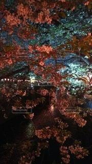 クリスマスツリーの写真・画像素材[3022895]