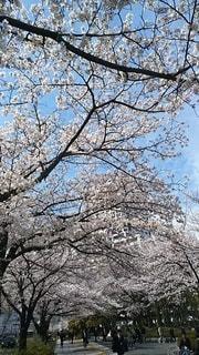 公園の大きな木の写真・画像素材[3022896]