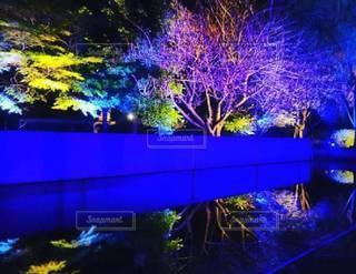水面にうつる夜桜の写真・画像素材[3027770]