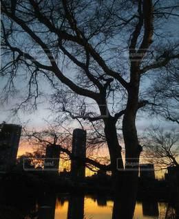 空,夜景,屋外,夕焼け,霧,シルエット,樹木,夕陽,草木,クラウド