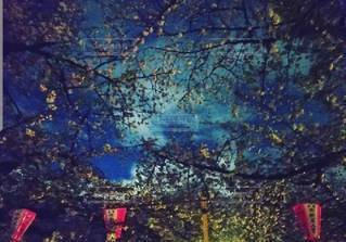 春,青,夜桜,樹木,草木,スカイ