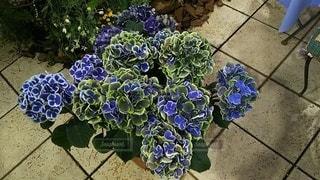 花,屋外,紫,紫陽花,草木,ガーデン,フローラ