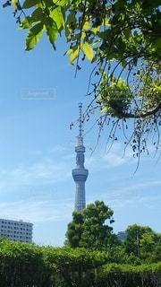 空,屋外,青い空,スカイツリー,タワー,樹木,草木