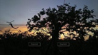 田舎の夕陽の写真・画像素材[3030763]