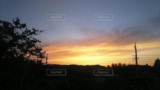 背景に夕日のある木の写真・画像素材[3030765]