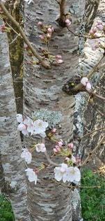 花のクローズアップの写真・画像素材[3039108]