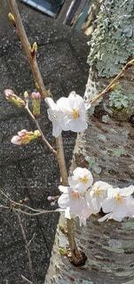 花のクローズアップの写真・画像素材[3039107]