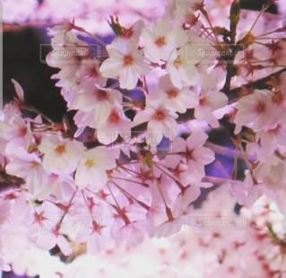 花のクローズアップの写真・画像素材[3039118]