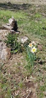 森の中の花の写真・画像素材[3041305]