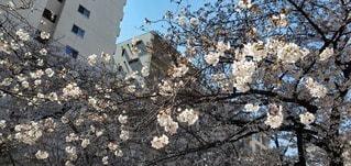 空,花,屋外,樹木,ブロッサム