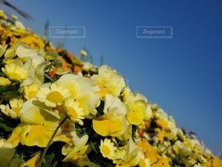 空,花,黄色,鮮やか,草木