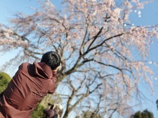 男性,1人,風景,空,桜,屋外,撮影,サクラ,樹木,人,写真