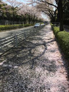 道の端に木のパスの写真・画像素材[1143145]