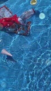 夏,スポーツ,屋外,プール,水,水面,泳ぐ,夏休み,家庭用プール