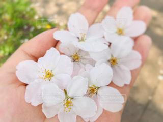 花を持つ手の写真・画像素材[3027177]