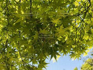 屋外,緑,綺麗,青空,葉っぱ,葉,鮮やか,樹木,青紅葉,草木,日中,フォトジェニック,インスタ映え