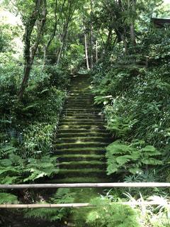 風景,森林,屋外,緑,階段,葉,景色,樹木,苔,新緑,草木